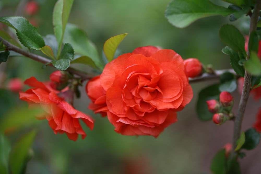 Cvatnja i problemi u cvatnji
