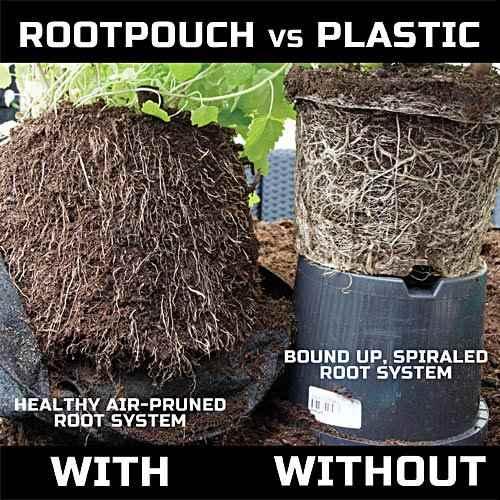 Razlika u razvoju korijena u plastici i root pouch-u