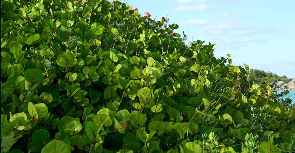 Vegetacija i problemi u vegetaciji